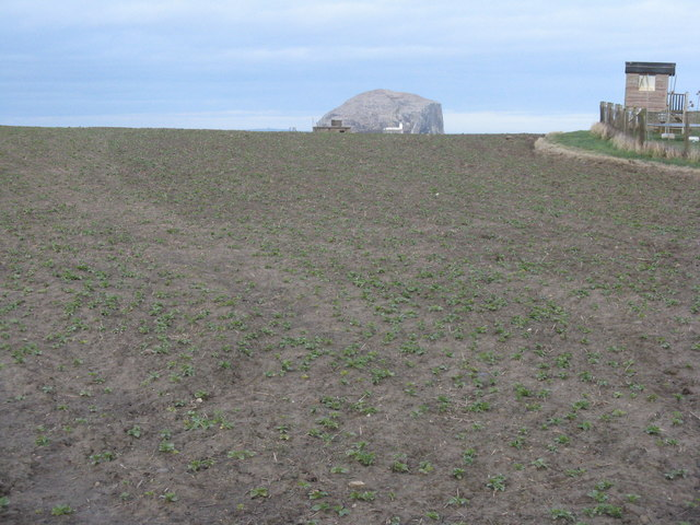 Broad Beans and the Bass Rock
