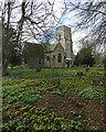 TL4349 : In Newton churchyard : Week 8