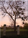 SP5206 : Gate to Magdalen College Water Meadow by Ibn Musa