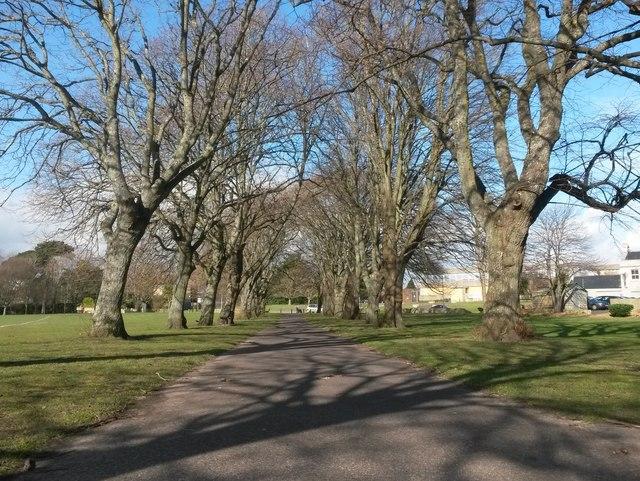 Christchurch: avenue of trees across Barrack Road rec