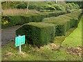 SK4032 : Pathway alongside the Italianate Garden by Alan Murray-Rust