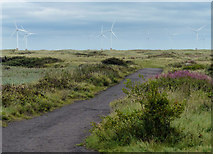 NZ5626 : Path to the beach at Coatham Sands by Mat Fascione