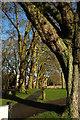 ST5774 : Redland Green by Derek Harper