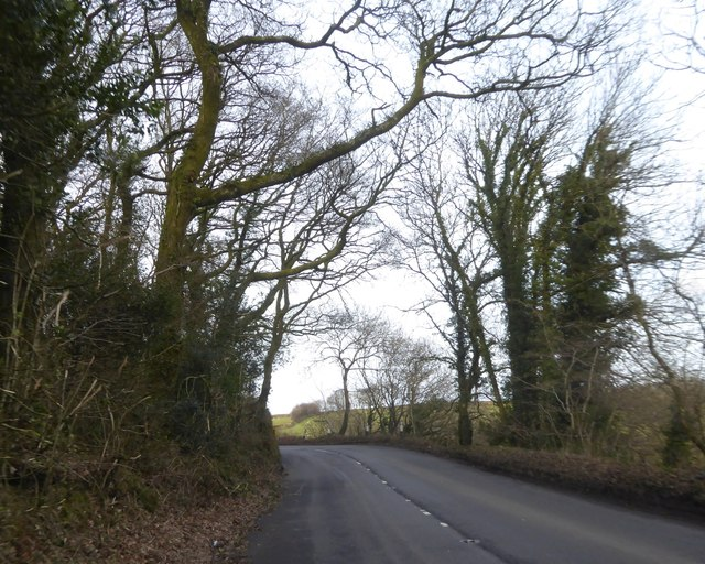 A399 bend in woodland north of Brayford