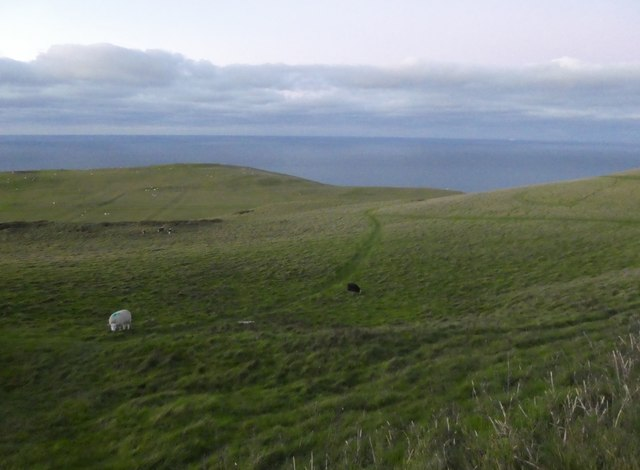 Sheep on Great Orme
