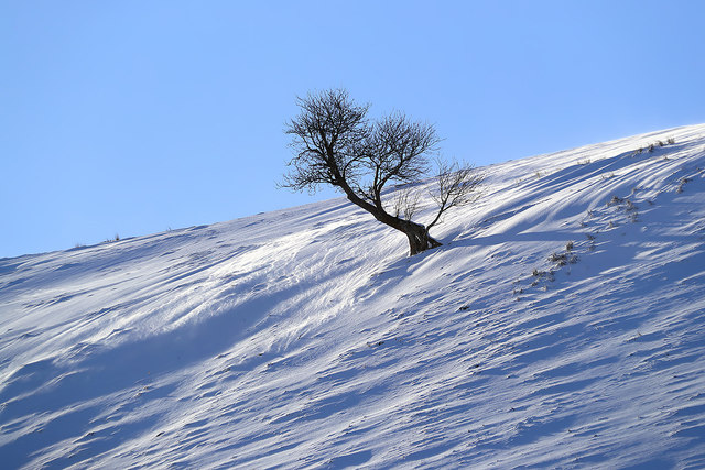 A winter tree at Long Bank