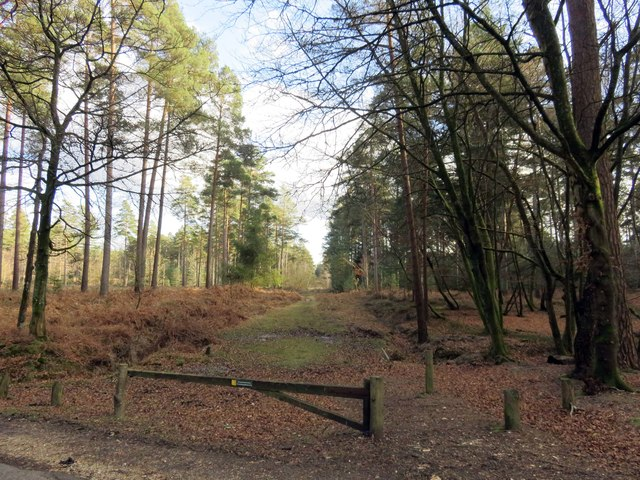 Track to Knightwood Inclosure