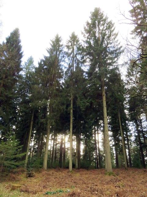 Woodland at Brock Hill