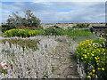 NU1341 : Gertrude Jekyll's garden at Lindisfarne by M J Richardson