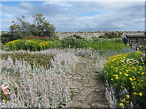 NU1341 : Gertrude Jekyll's garden at Lindisfarne by M J Richardson
