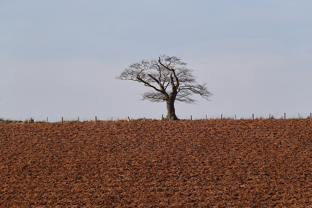 A ploughed field and tree at Bemersyde