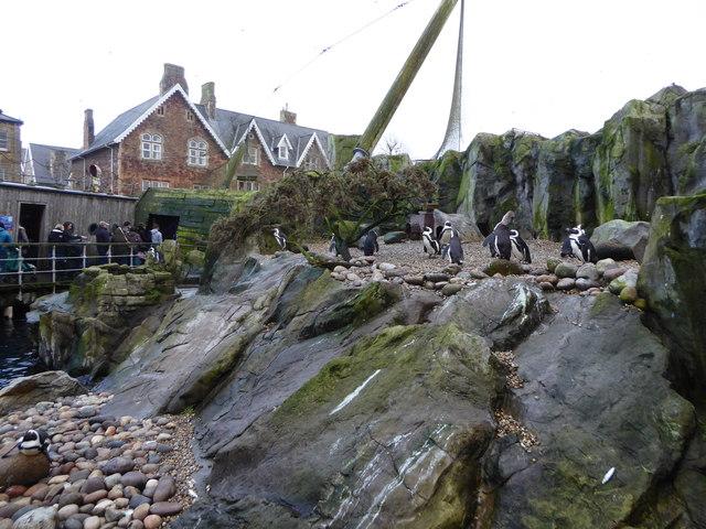 Penguins at Bristol Zoo