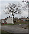 ST3096 : Deciduous tree on a Croesyceiliog corner, Cwmbran by Jaggery
