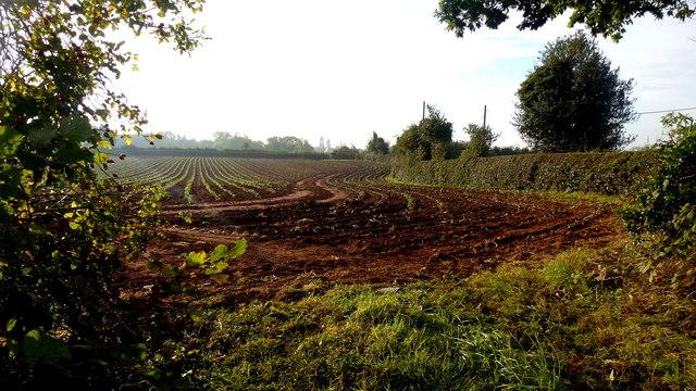 Recently-drilled crop © Jonathan Billinger :: Geograph