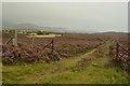 NN7397 : Moorland Gateway near Luibleathann, Scottish Highlands by Andrew Tryon
