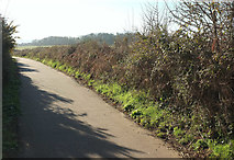 SX9777 : Inner coast path on Ladies Mile by Derek Harper