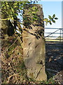 SJ1755 : Gatepost and bench mark east of Rhos-goch by John S Turner