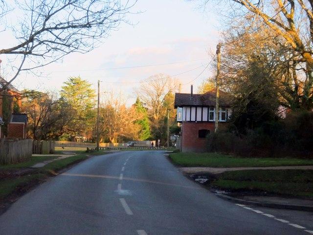 Rhinefield Road in Brockenhurst