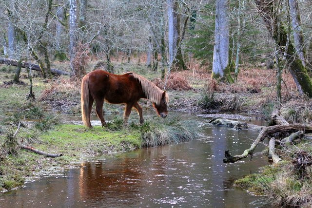 A pony by the Black Water