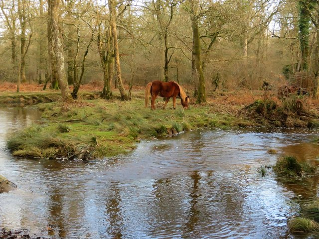 The Black Water in the New Forest
