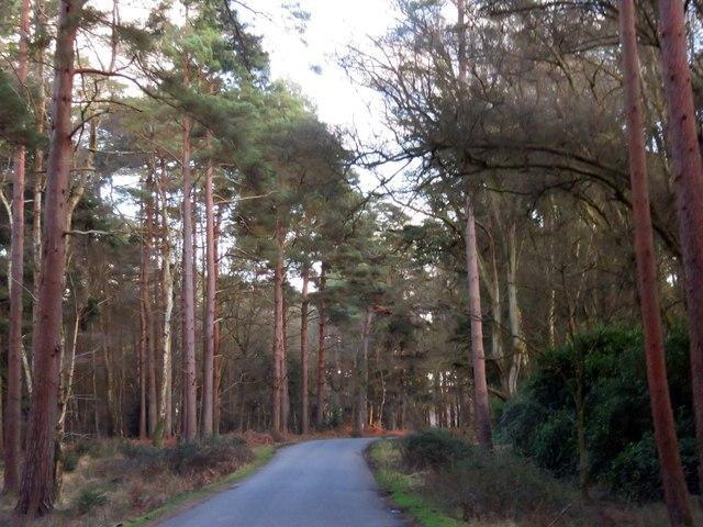Rhinefield Ornamental Drive