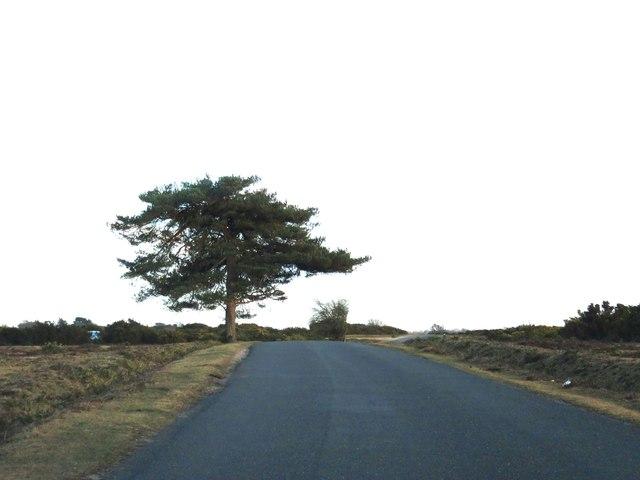 Rhinefield Road to Brockenhurst