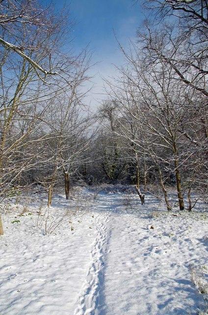 Ash Plantation Track