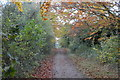 TL5053 : Autumnal colours, Roman Road by N Chadwick
