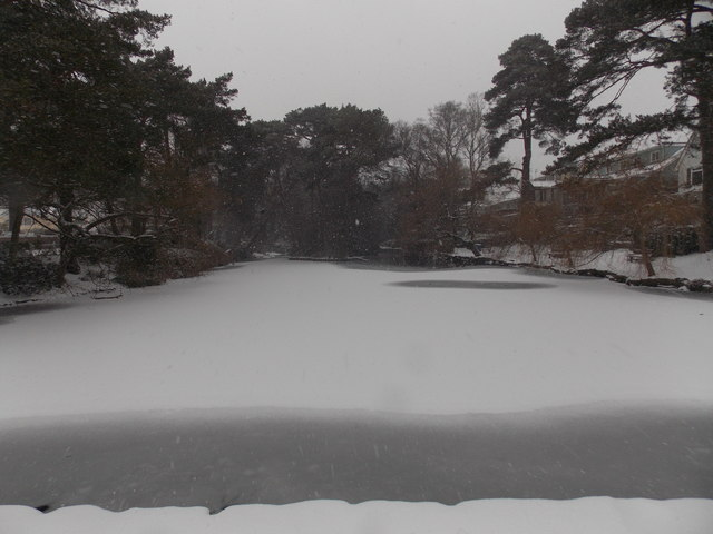 Branksome: snow falling on a frozen Coy Pond