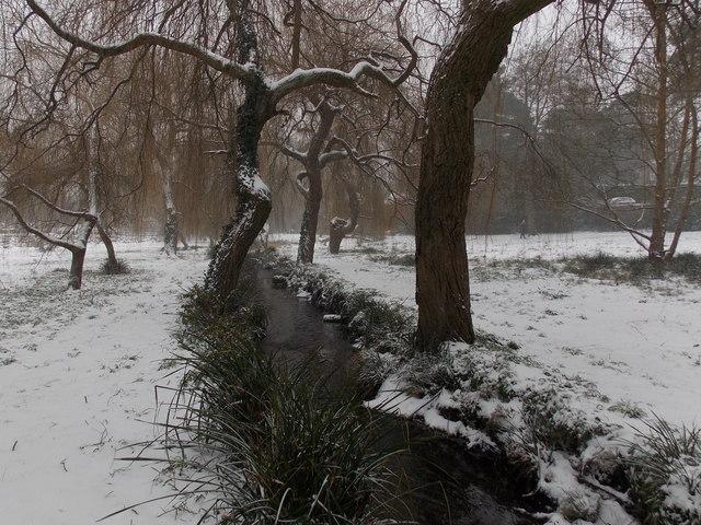 Branksome: snow in Coy Pond Gardens