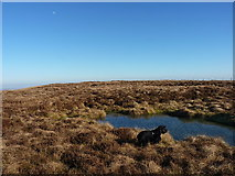 SJ0930 : Small boggy pool on Godor by Richard Law