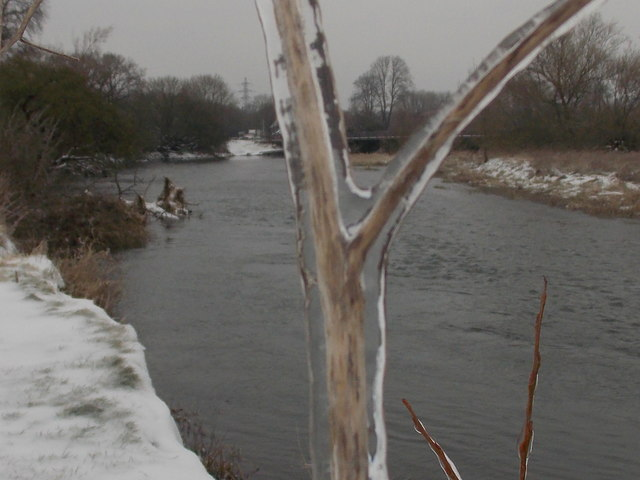 Kinson: frozen stalk by the River Stour