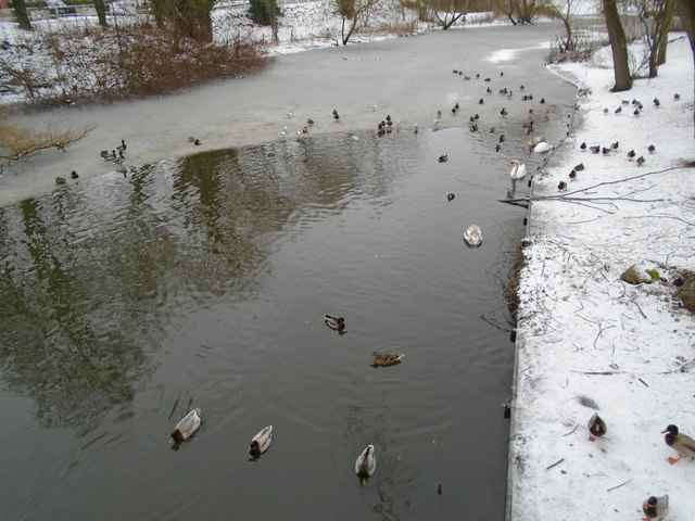 Part-frozen River Colne
