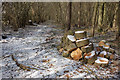 SU4470 : Logs in Bagnor Wood by Des Blenkinsopp