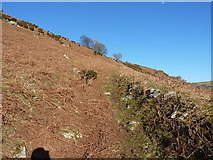 SJ0828 : Old trackway on the hillside by Richard Law
