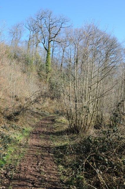 Path through Paradise Wood