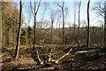 SO6755 : Tree felling in Greenfield Wood by Philip Halling