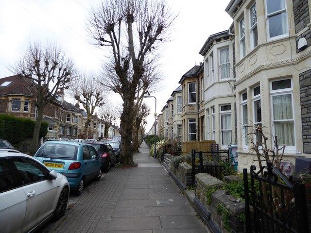 Pollarded trees, Sefton Park Road