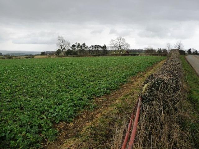 Corner of an arable field, off Watlass Moor Lane
