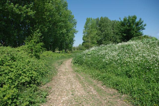 Track below river wall