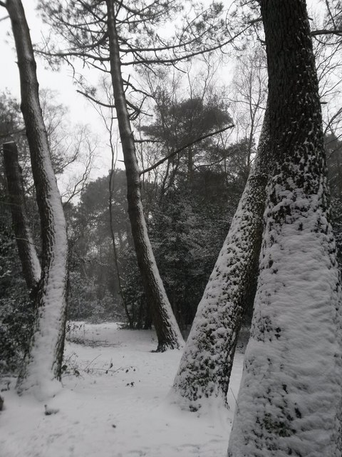 Talbot Village: a snowscape in the woods