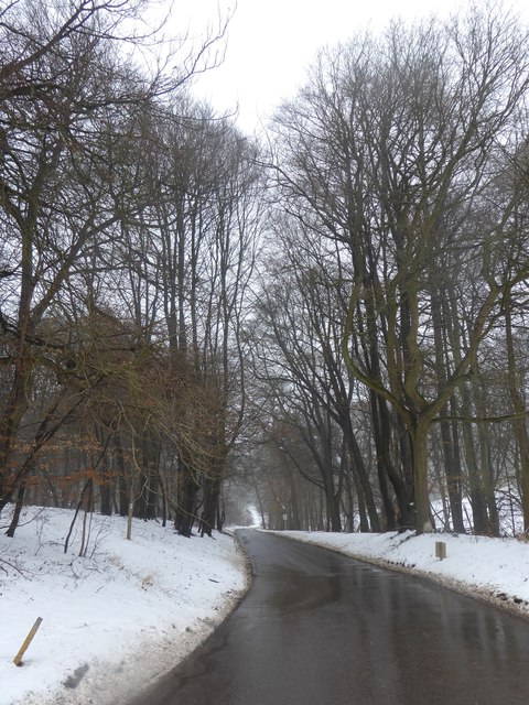 The road next to the Golden Valley, Ashridge Estate