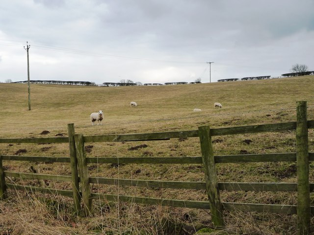 Sheep pasture, north of East Hauxwell