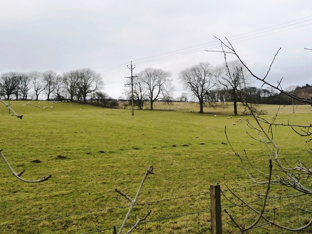 Trees along a field boundary