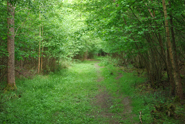 Path in Poling Copse