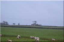 SX9986 : Ridgeway Cottage by N Chadwick