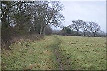 SX9986 : Footpath to Woodbury by N Chadwick