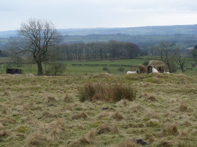 Extra winter food for the sheep, north of Barden