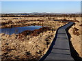 SN6862 : Boardwalk on the loop path, Cors Caron by Rudi Winter