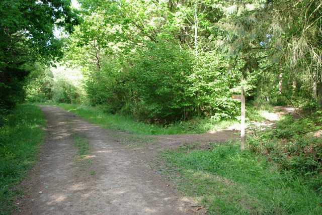 Woodland path junction